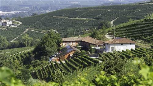 Paolo Manzones vingård