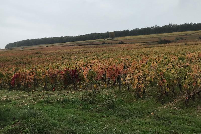 Smukt omkring Corton højen i oktober