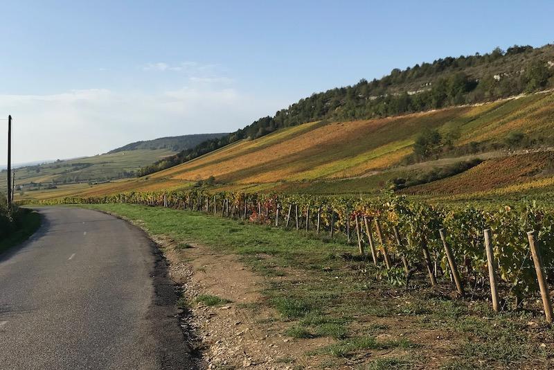 En smuk tur mod Meursault fra Monthelie