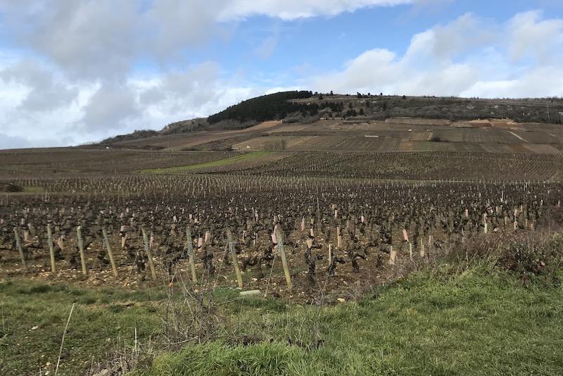 Fra Maranges i det sydlige Bourgogne