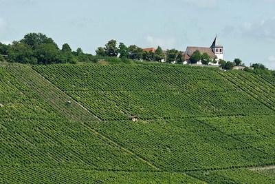 Vinmark i Tyskland
