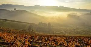 Årgangene i Piemonte