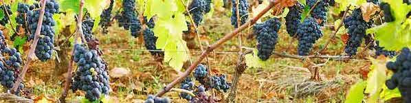 Udsalg hos Pinochar Wine