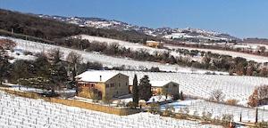 Palazzo og deres vingård
